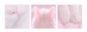 kitty aesthetic   f2u