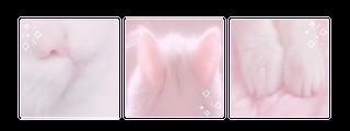kitty aesthetic | f2u