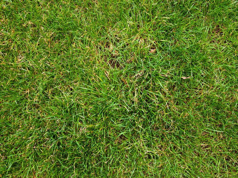 tall grass texture seamless. Modren Tall Grass Texture Seamless Google Search Landscape Architecture Intended Tall Grass Texture Seamless