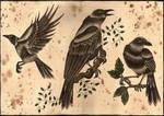 The Birds :O