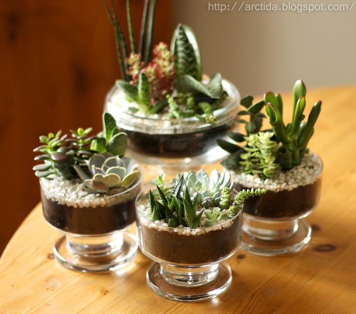 DIY Succulent gardens by Arctida