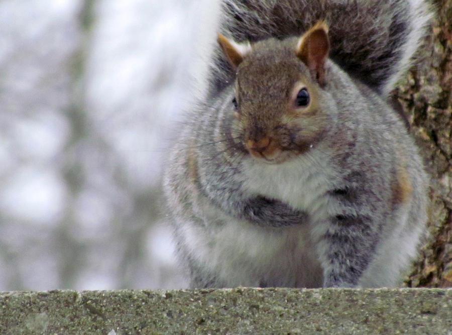 A Fat Squirrel 22