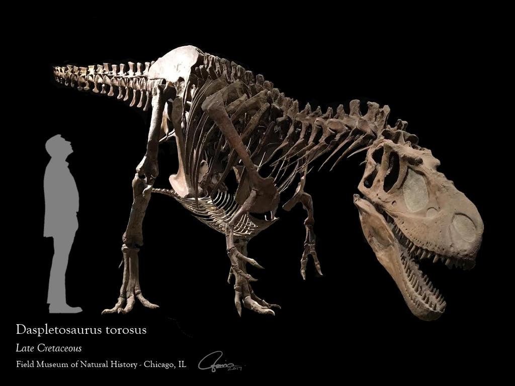 Daspletosaurus Skeleton by ajgus on DeviantArt