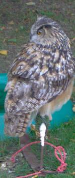 Bird of Prey 8