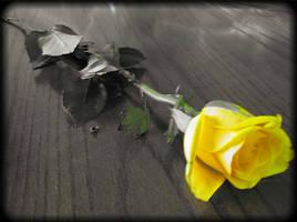Yellow Rose III by HA91