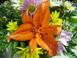 Orange Lily by HA91