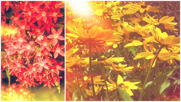Red Days and Summer Haze