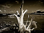 Rooted in the Sky