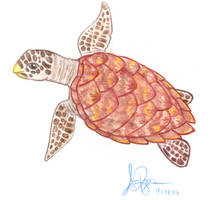 Hawksbill by RuneElf