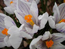 Spring is HERE by RuneElf