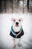 Snow Dog by OkamiaAmaterasu