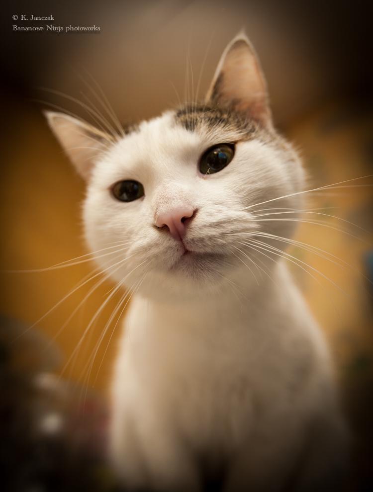 Cat Franco by OkamiaAmaterasu