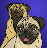 Pugs are Funny by melissapugs