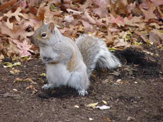 Another Squirrel Photo