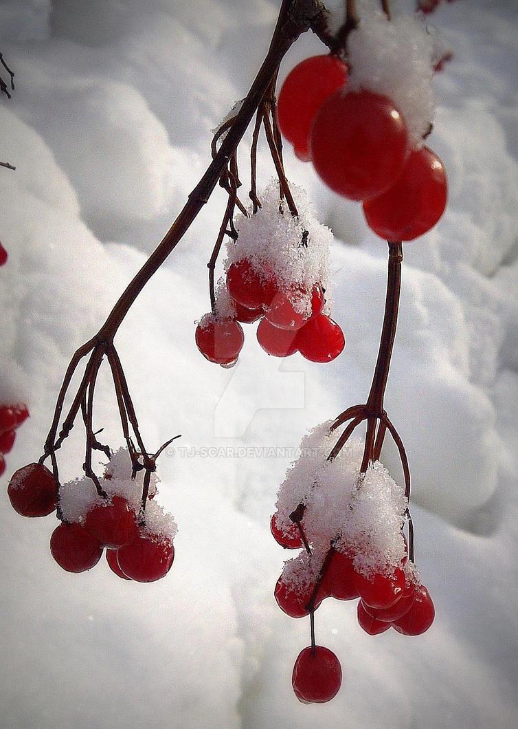 Cranberries by TJ-Scar