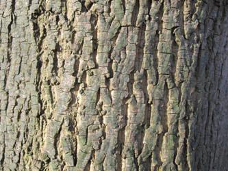 bark by Merlinator-Stock