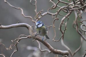 Birdy by quodfuero