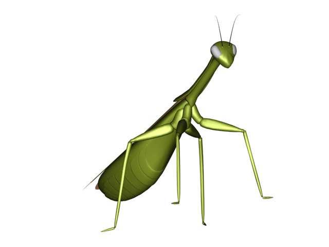 Mantis religiosa by retsbom