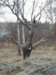 dead tree 01