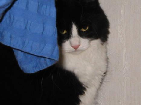 grannys cat