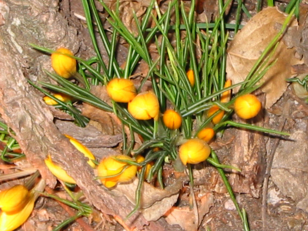 yellow flowers 01 by malicia-stock