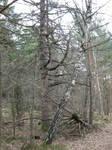 dead trees 01
