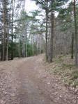 woodland path 01