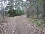woodland path 02