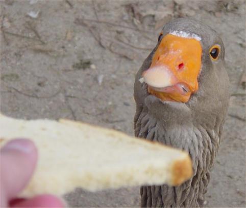 Synjit is ALWAYS hungry by quexthemyuu