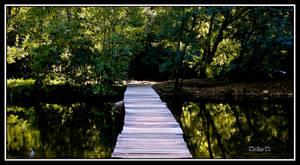 le petit pont