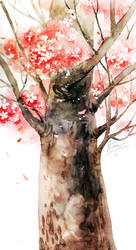 cherry blossoms by Cowpea