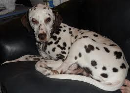 my dog by dannny3
