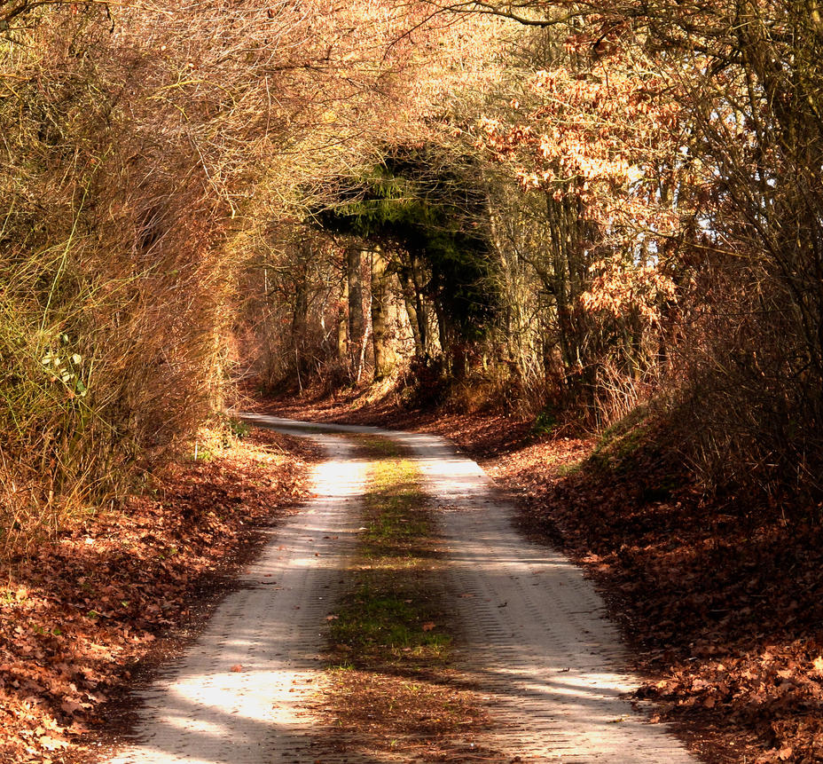 Autumn Wooden Tunnel by Floriarty