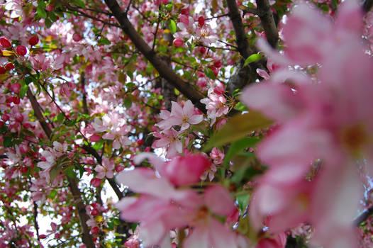 Blossom Riot