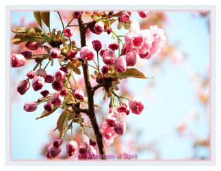 Blossoms of April by AngusMacRath