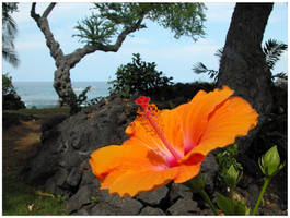 Orange Hibiscus by the Sea by AngusMacRath
