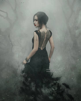 Raven Land
