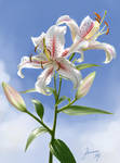 Lilies by Pterona