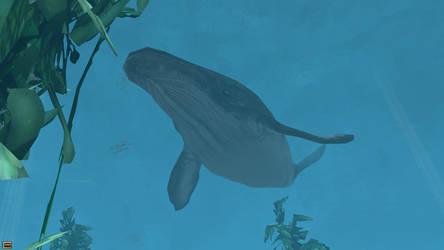 Wildlife Park 2 - humpback whale