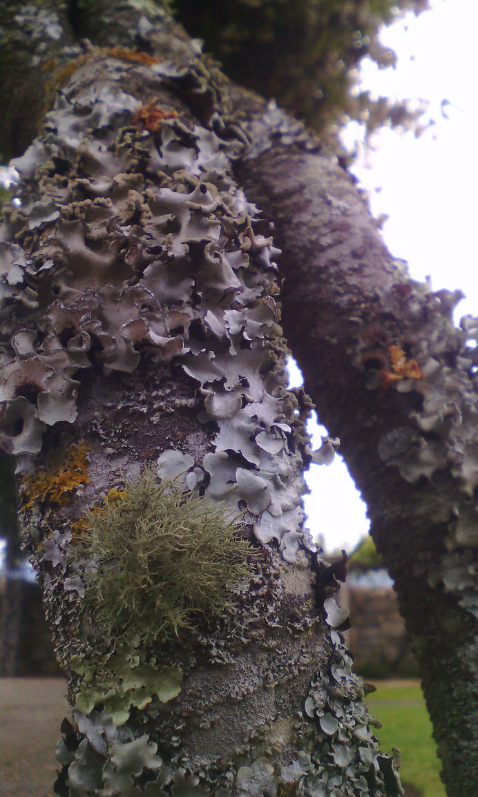 More lichen by GhostOfTheEmptyGrave