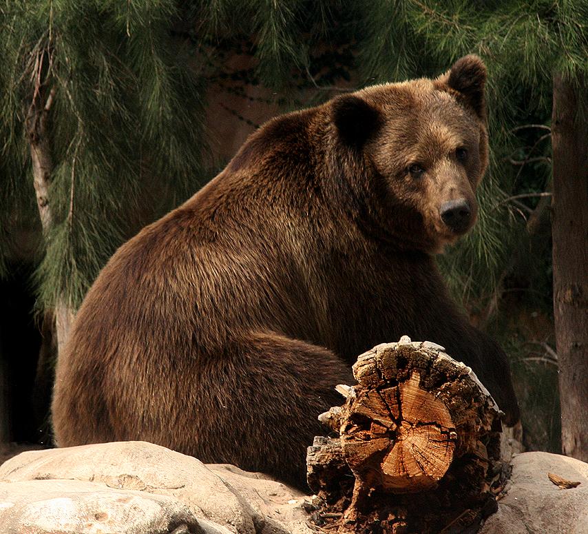 Bear by E-mune