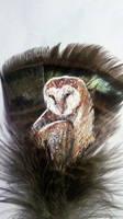 Barn Owl by Supaslim