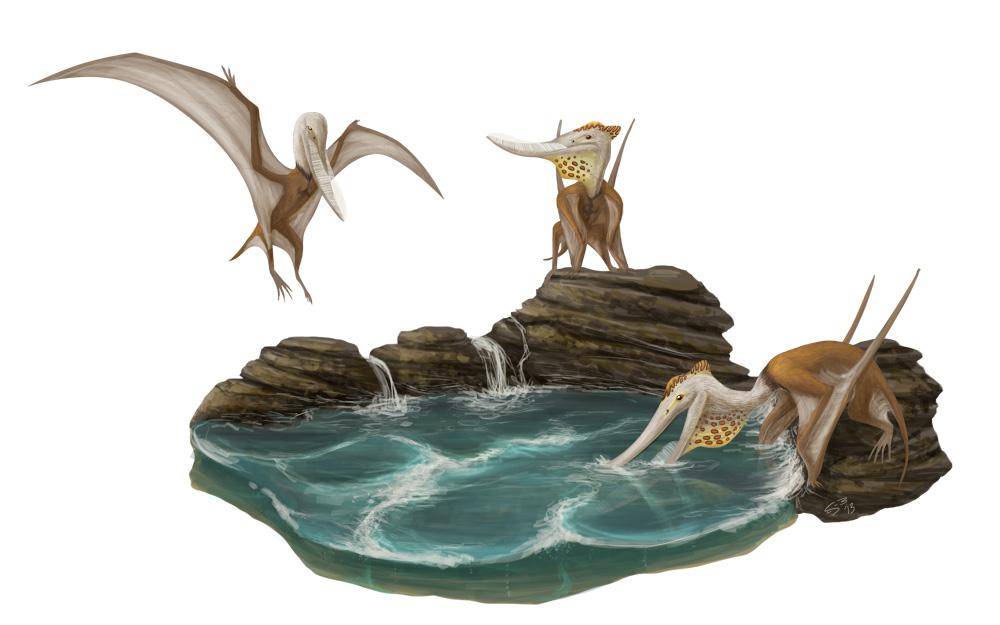 Pterodaustro by Supaslim