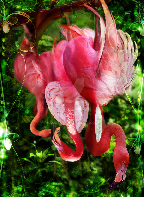 Birth of Flamingo by Amosha