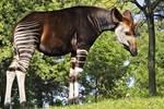 Zoo Tycoon Profile: Okapi