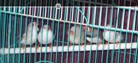 My cute little birdies by CHLI