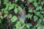 Buddy in a bush