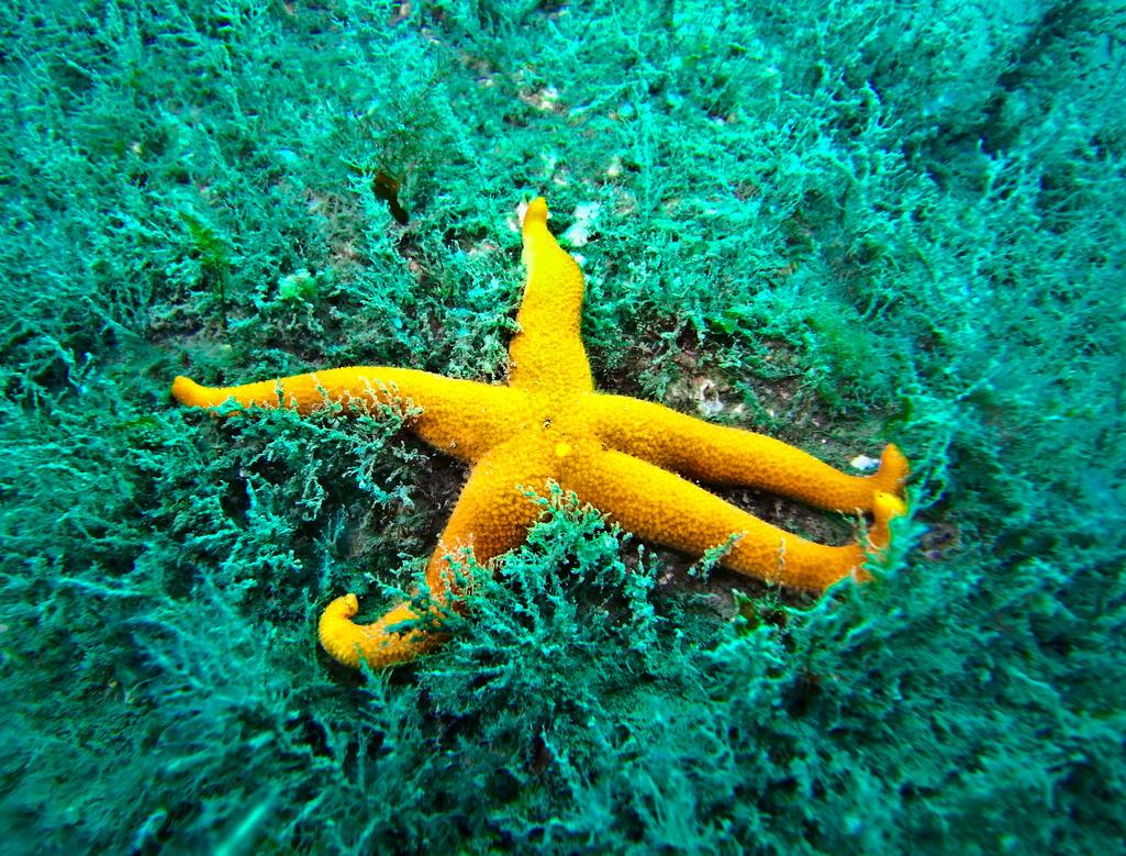 Starfish by TonallyTormented