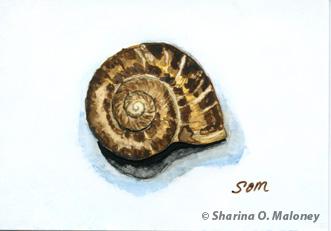 Snail Still Life by SOM-Sharina
