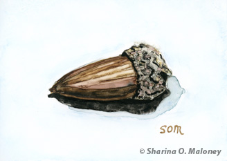 Acorn Still Life by SOM-Sharina